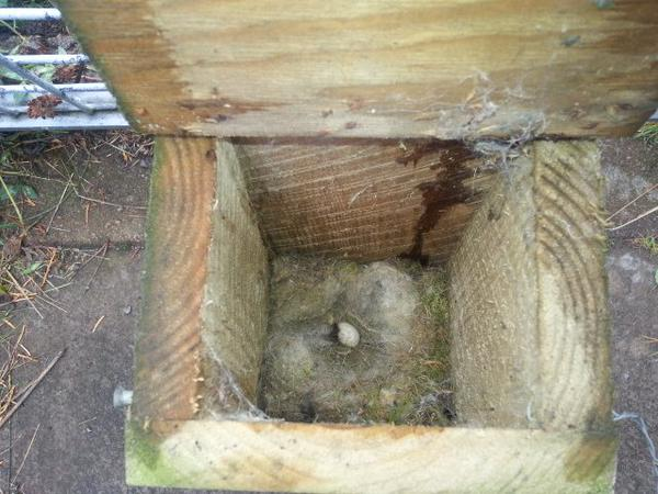 Golf Club nest box