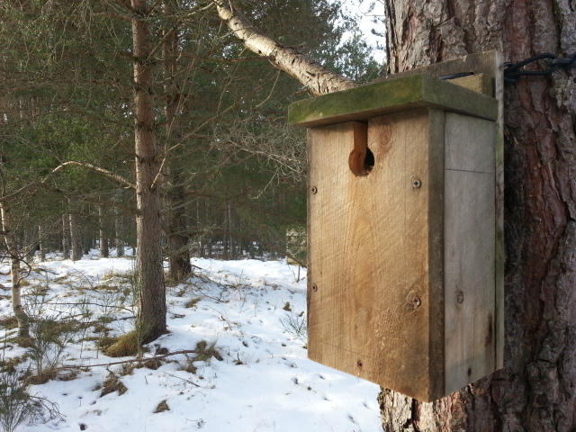 The Unsprung Nestbox