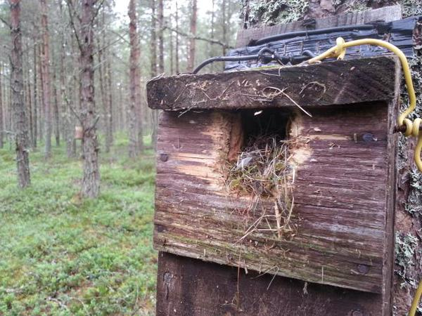 Nest box with nest material overflowing