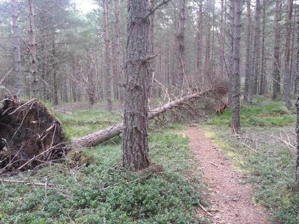 Fallen tree across the path