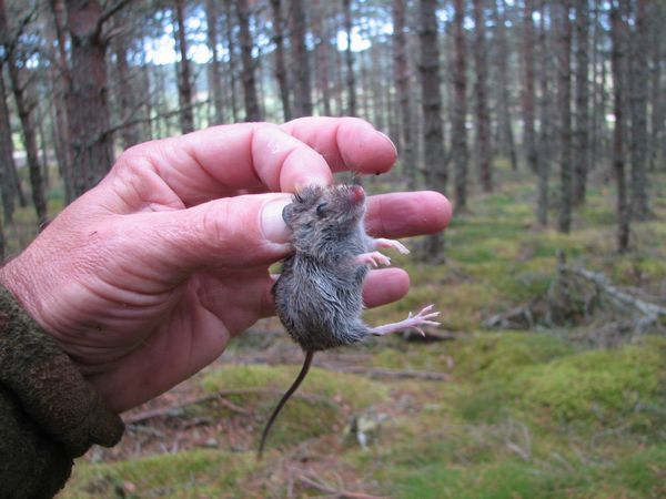 The mouse that had been caught in the feeder
