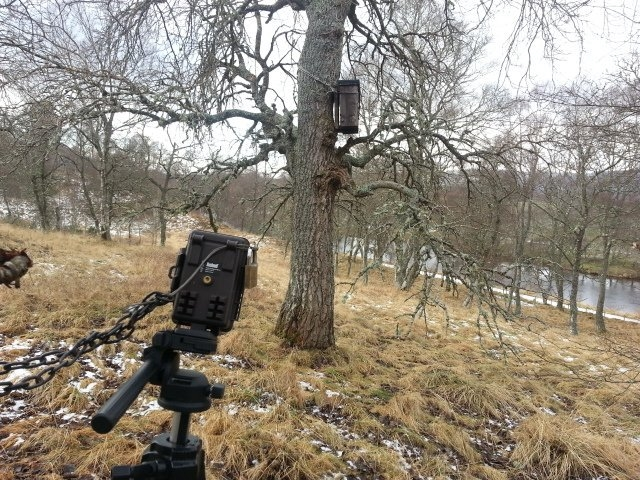 Monitoring the pine marten nest box tree